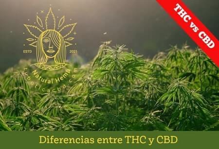 diferencias cbd y thc